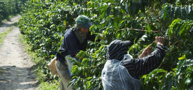 Where Does the World's Best Coffee Come From?